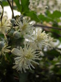 Fleurs après pluie Images libres de droits
