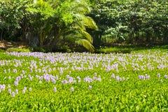 Fleurs aquatiques dans Kona Hawaï Images stock