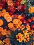 Fleurs ardentes Photographie stock libre de droits