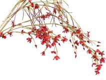 Fleurs artificielles Photographie stock libre de droits