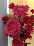 Fleurs artificielles, chrysanthèmes, macro tir photos libres de droits