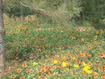 fleurs artificielles sur le bord de la route au printemps image stock