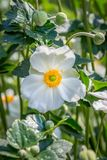 Fleurs assez blanches Image stock