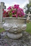 Fleurs assez roses dans un cimetière anglais Photos stock