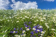 Fleurs au bord du champ Images stock