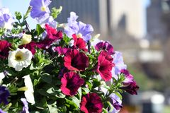 Fleurs au centre de la ville de Pretoria image stock