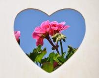 Fleurs au coeur sur le fond de ciel bleu Image libre de droits