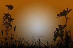 Fleurs au coucher du soleil Images libres de droits
