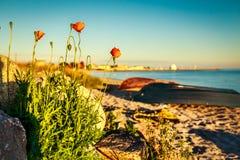 Fleurs au coucher du soleil Images stock