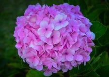 Fleurs au jardin d'une maison photographie stock