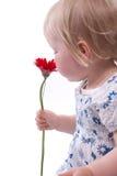 Fleurs au jour de mères Photos libres de droits