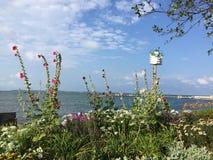 Fleurs au lac Photographie stock