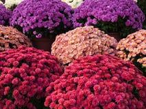 Fleurs au marché Photos libres de droits