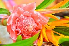 fleurs au moine bouddhiste Photographie stock