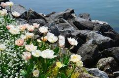 fleurs au pied des Alpes Photos libres de droits