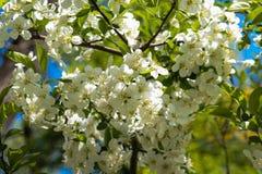 Fleurs au printemps Image libre de droits