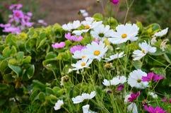 Fleurs au printemps image stock