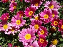 Fleurs au soleil Photos libres de droits