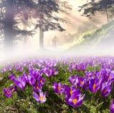 Fleurs au soleil photo stock