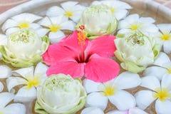 Fleurs aux arrière-plans de l'eau Photos stock