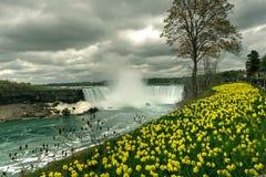Fleurs aux chutes du Niagara, Canada Photos libres de droits