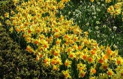 Fleurs aux jardins botaniques de NJ Photos libres de droits