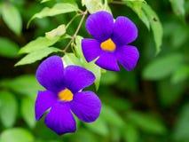 Fleurs aux jardins de l'eau de Vaipahi, Tahiti, Polynésie française photos stock