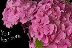 Fleurs avec des chemins de découpage Photographie stock