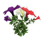 Fleurs avec des feuilles Photographie stock