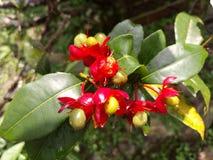 Fleurs avec des fruits Photos stock
