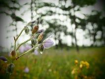 Fleurs avec des gouttes de l'eau image libre de droits