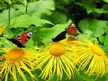 Fleurs avec des guindineaux Photo stock