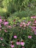 Fleurs avec des guindineaux Images stock