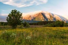 Fleurs avec la montagne brumeuse images stock