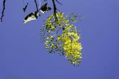 Fleurs avec le ciel Photographie stock libre de droits