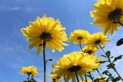 Fleurs avec le ciel image stock