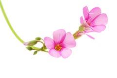 Fleurs avec le fond blanc Image stock