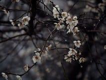 Fleurs avec le ressort Image stock