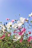 Fleurs avec le sourire image libre de droits