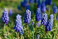 Fleurs avec les fleurs bleues Photos stock