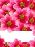 Fleurs avec les pétales rouges Images stock
