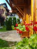 Fleurs avec une maison en bois Photo stock