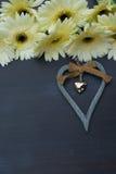 Fleurs beiges de gerbera Photographie stock libre de droits
