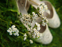 Fleurs blanches avec des chaussures photos stock