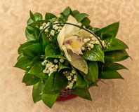 Fleurs blanches avec les feuilles vertes Image libre de droits