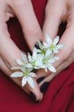 Fleurs blanches chez des mains de la femme Photos libres de droits