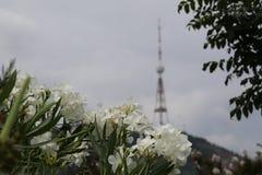 Fleurs blanches contre le contexte de la tour de TV photos libres de droits