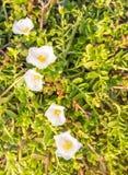Fleurs blanches d'éclat Photographie stock