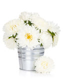 Fleurs blanches d'aster Photos libres de droits