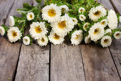 Fleurs blanches d'aster Image stock
